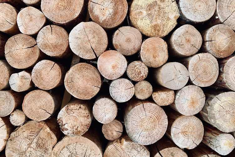 Tipos de madera y para qué se utiliza cada uno
